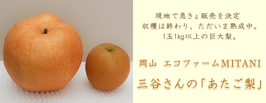 岡山三谷ファーム 三谷さんの「あたご梨」