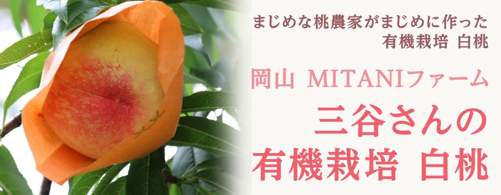 岡山 MITANIファーム 三谷さんの有機栽培 白桃