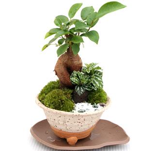 鉢・盆栽・フラワー