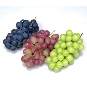 ≪林フルーツ≫季節のぶどう食べ比べ
