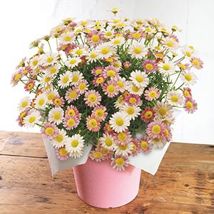 花鉢・アレンジメント・ガーデニング